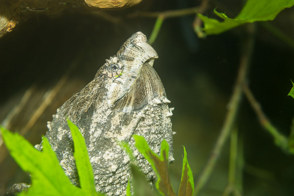 Basel Zoo - News - What's new at Basel Zoo - Alligator