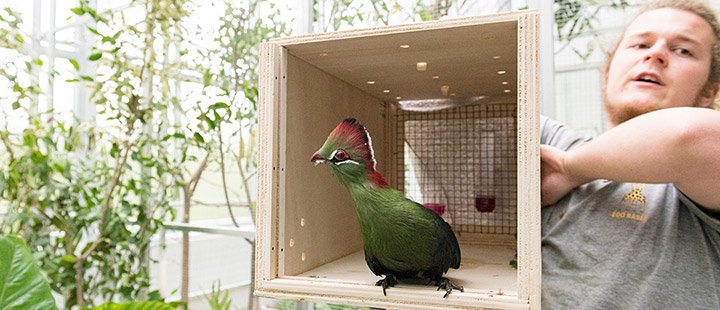 A temporary home for Basel Zoo's birds