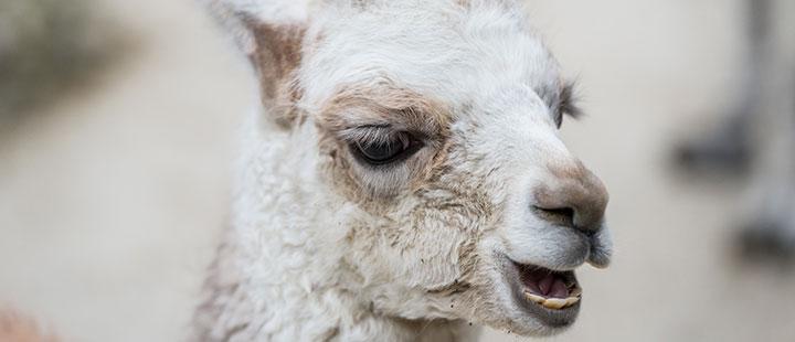 Wollpullover oder Kurzhaarfrisur – Nachwuchs im Kinderzoo