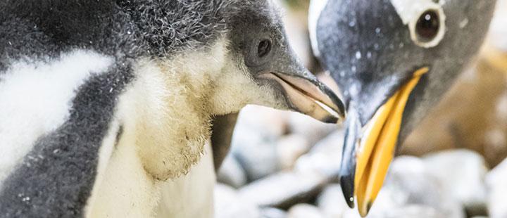 Neues Zuhause für Pinguine