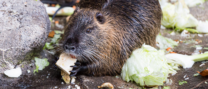 Moving time for the nutria group