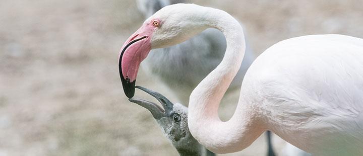 Auf der Flamingo-Anlage gibt es einiges zu entdecken