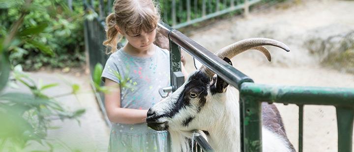 Der Zoo Basel feiert 40 Jahre Kinderzoo