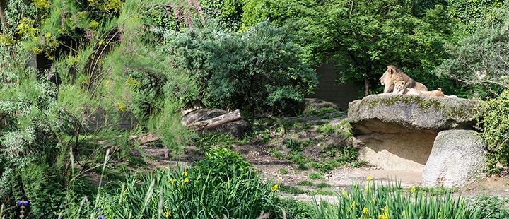 Basel Zoo-Animals-Enclosures and pens